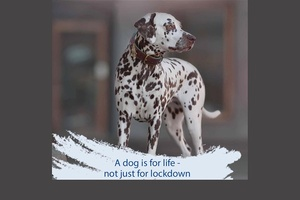 A dog is for life- not just for lockdown